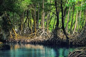 Ekosistem Hutan Mangrove